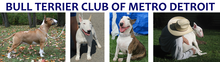 Welcome to the Bull Terrier  Club of Metro Detroit website!!